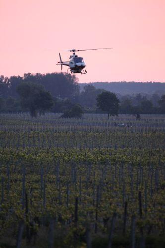 Helikoptereinsatz für Frostschutz