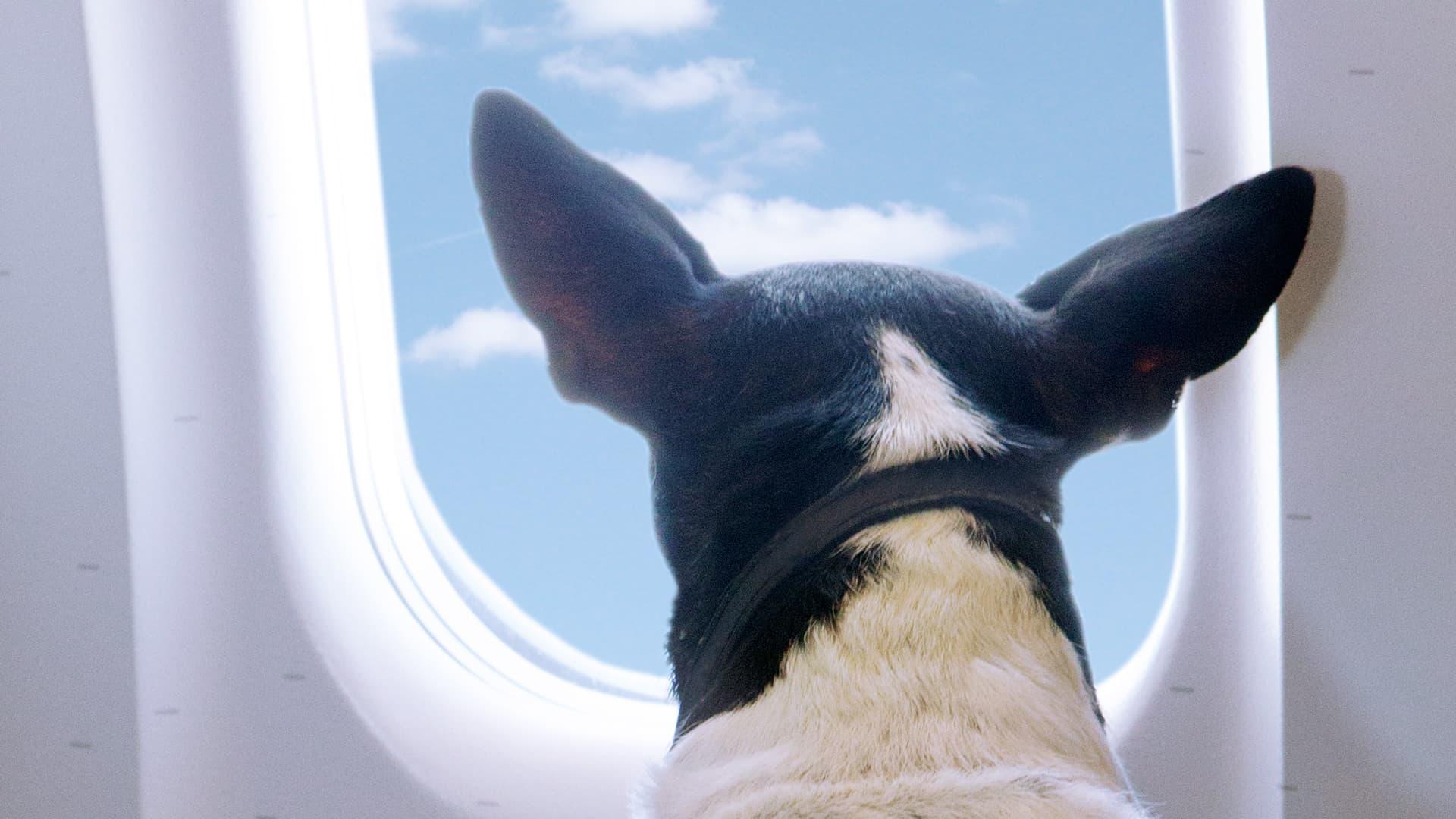 Noleggiare un jet privato con un cane